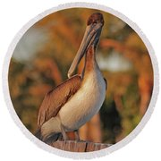 Round Beach Towel featuring the photograph 9- Brown Pelican by Joseph Keane