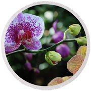 Butterfly Orchid Flowers Round Beach Towel