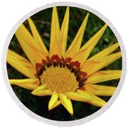 Round Beach Towel featuring the photograph Yellow Gazania by Elvira Ladocki