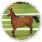 A Beautiful Arabian Filly In The Pasture. Round Beach Towel
