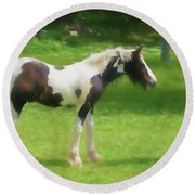 A Beautiful Young Gypsy Vanner Standing In The Pasture Round Beach Towel