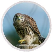 A Beautiful Young Kestrel Looking Behind You Round Beach Towel