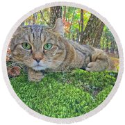 Round Beach Towel featuring the photograph A Bed Of Moss by Susan Leggett
