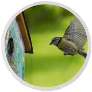A Busy Blue Tit Mum Round Beach Towel