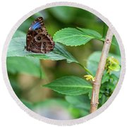 Round Beach Towel featuring the photograph A Butterfly Waiting by Raphael Lopez