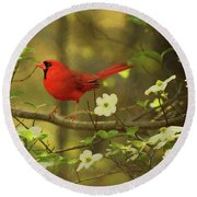 Round Beach Towel featuring the photograph A Cardinal And His Dogwood by Darren Fisher