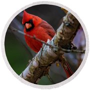 A Cardinal In Spring   Round Beach Towel