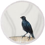 A Carib Grackle (quiscalus Lugubris) On Round Beach Towel
