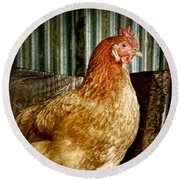 A Chicken Named Rembrandt Round Beach Towel