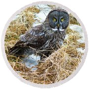 A Close Encounter - Great Gray Owl Round Beach Towel