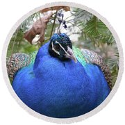 A Close Up Look At A Blue Peafowl Round Beach Towel