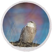 A Colorful Snowy Owl Round Beach Towel