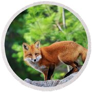 A Cunning Hunter Round Beach Towel by Gary Hall