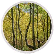 Round Beach Towel featuring the photograph A Day In The Woods by Scott Read