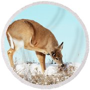 A Deer Playing In Snow Round Beach Towel