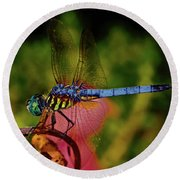 Round Beach Towel featuring the photograph A Dragonfly 028 by George Bostian