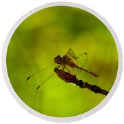 A Dragonfly Smile Round Beach Towel