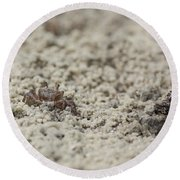 A Fiddler Crab In The Sand Round Beach Towel