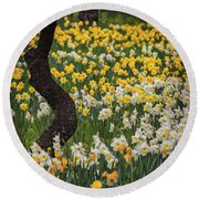 A Field Of Daffodils Round Beach Towel by Mitch Shindelbower
