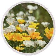 Round Beach Towel featuring the photograph A Field Of Golden And White Poppies  by Saija Lehtonen
