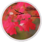 A Flash Of Autumn Round Beach Towel