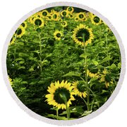 A Flock Of Blooming Sunflowers Round Beach Towel