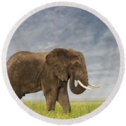 Round Beach Towel featuring the photograph A Gentle Giant by Sandra Bronstein