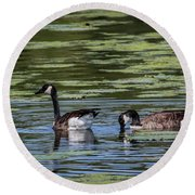 A Goose Ducks In Water Round Beach Towel by Ray Congrove