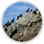 A Gulp Of Cormorants Round Beach Towel by Sandy Taylor