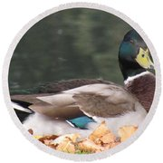 A Handsome Mallard Round Beach Towel