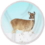 A Lonley Deer In Snow Round Beach Towel