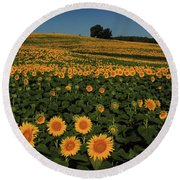 Round Beach Towel featuring the photograph A Lot Of Birdseed  by Chris Berry