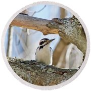 A Male Downey Woodpecker  1111 Round Beach Towel by Michael Peychich