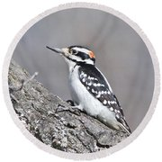 A Male Downey Woodpecker 1120 Round Beach Towel by Michael Peychich