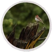 A Male Purple Finch In Spring Round Beach Towel