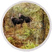 A Mother And Calf Moose. Round Beach Towel