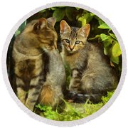 A Pair Of Feral Cats Round Beach Towel