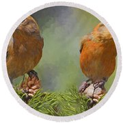 A Pair Of Male Red Crossbills - Painted Round Beach Towel
