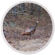 A Pair Of Turkeys 1152 Round Beach Towel by Michael Peychich
