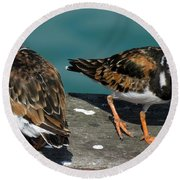 A Pair Of Turnstones Round Beach Towel