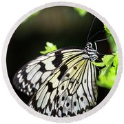 Round Beach Towel featuring the photograph A Paper Kite Butterfly On A Leaf  by Saija Lehtonen