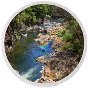 A Parrot In A New Zealand Gorge Round Beach Towel