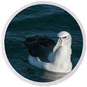 A Portrait Of An Albatross Round Beach Towel