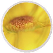 A Ray Of Sunshine Round Beach Towel by Roy McPeak
