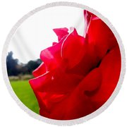 Round Beach Towel featuring the photograph A Rose In The Sun by Robert Knight