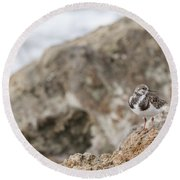 A Ruddy Turnstone Perched On The Rocks Round Beach Towel