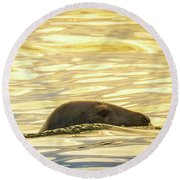 A Seal's Late Afternoon Swim Round Beach Towel