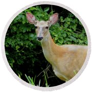 A Serious Deer Round Beach Towel