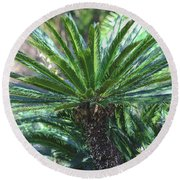 Round Beach Towel featuring the photograph A Shady Palm Tree by Raphael Lopez