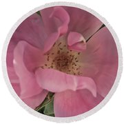 Round Beach Towel featuring the photograph A Single Pink Rose by Joann Copeland-Paul